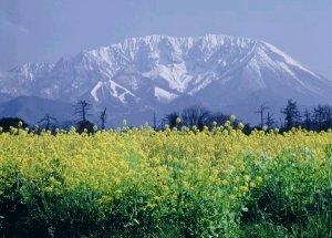 画像2: <大山町産>【大山養蜂園】はちみつ 300g