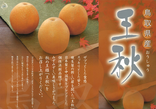 鳥取県大山町産 王秋梨