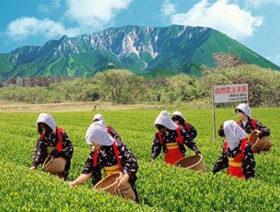 陣構茶生産組合「大山新茶まつり」の様子